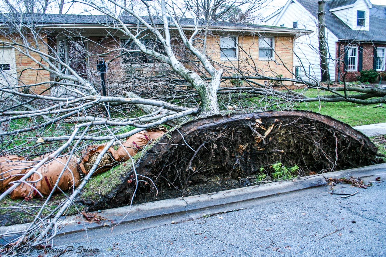 Picture of uprooted tree